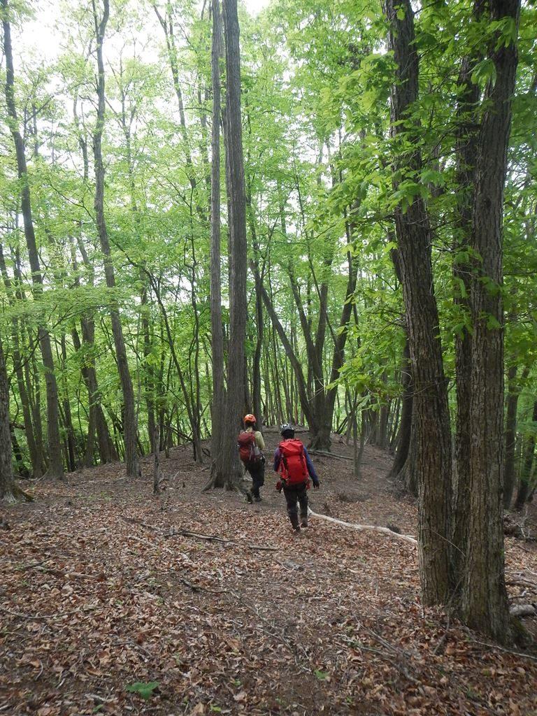 雰囲気のいい樹林の下り