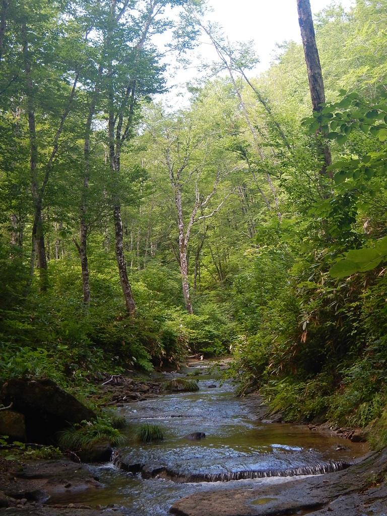 ブナの森を流れる