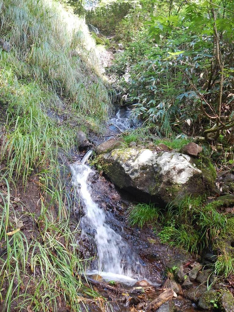 多段の滝で出合う枝沢
