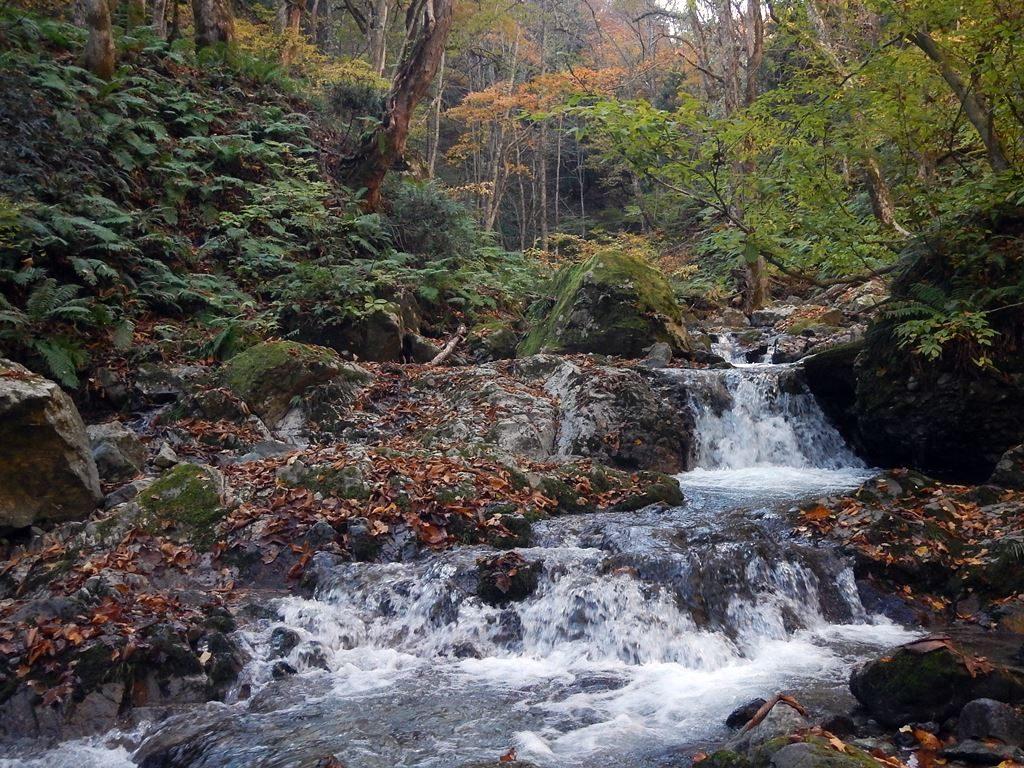 広葉樹林の中の穏やかな流れ