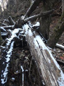 倒木に雪の名残が
