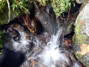 黒川谷中流部の湧水