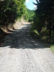 奈良倉山から佐野峠へ向かう林道