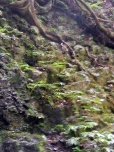 木の根に括り付けられたトラロープ