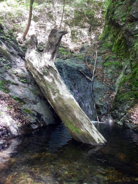 太い倒木のある滝