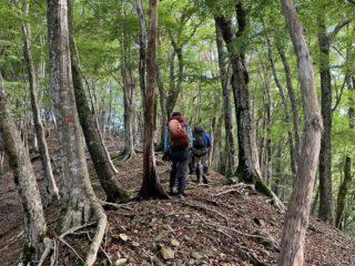 林道へは、尾根伝いにショートカットする
